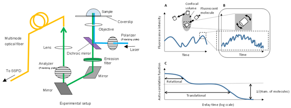 Fig. 3  Measurement setup and schematic diagram of principles of polarization-dependent FCS(pol-FC).